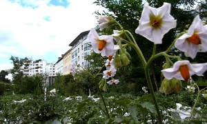 MIN_Week 60_Prinzessinnengarten_wm