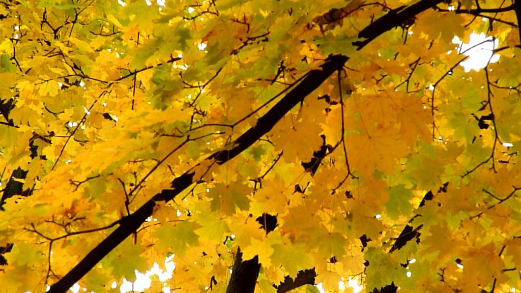 MIN_Week 26_Fall_Colors