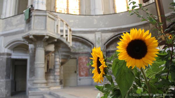 MIN126_Zionskirche_Sonnenblumen_s