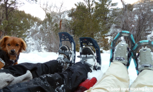 Snowshoeing With Whiskey Dog – In A Colorado Minute (Week 198)