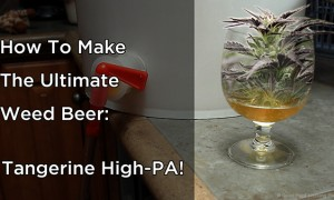 MIN 264_Weed Beer_title_s