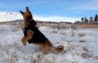 MIN 299_Snow-Catching Dog_Left_s