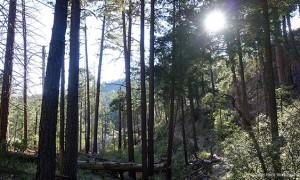 Mount Lemmon_AZ_s