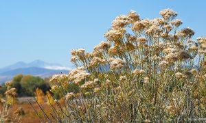 autum-wildflowers_min-337_01_main_s