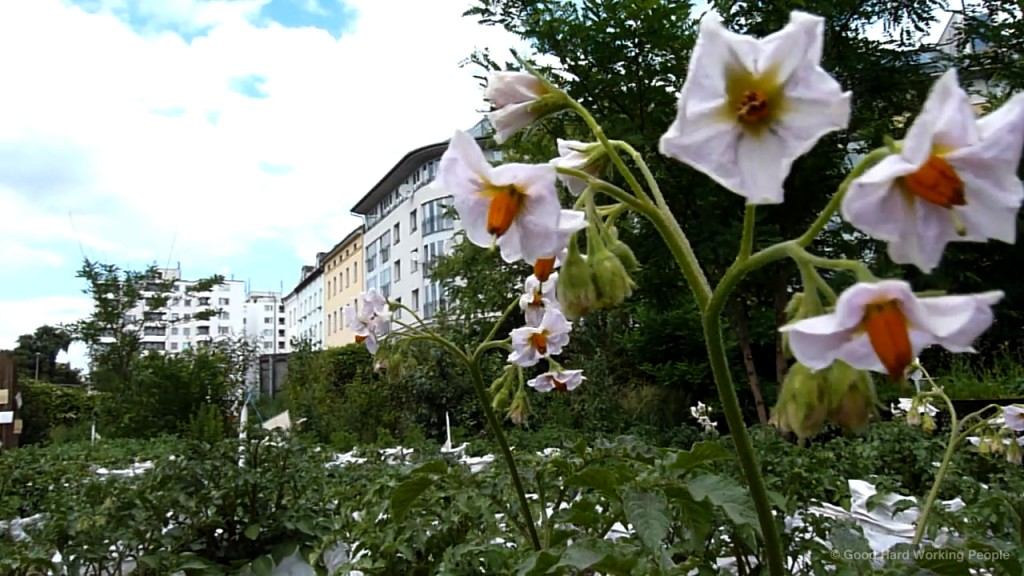 MIN_Week 60_Prinzessinnengarten_wm