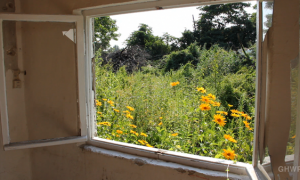 MIN_117 Abandoned Garden_xs