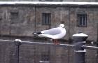 MIN_Week 40_Birds