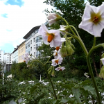 MIN_Week 60_Prinzessinnengarten
