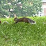Prospect Park Brooklyn Minute Squirrel