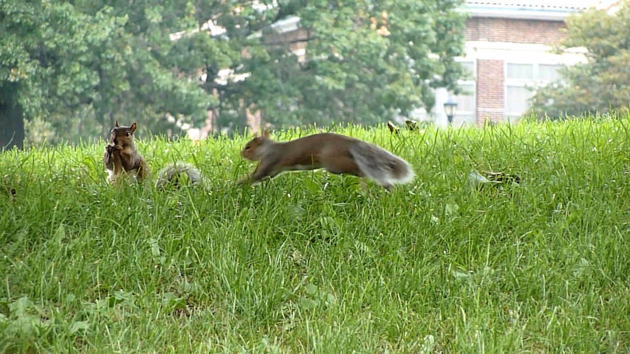 Prospect Park, squirrels, In A Brooklyn Minute