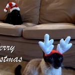 Christmas Cats_Merry Christmas