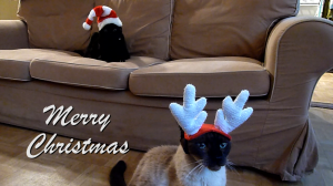 Christmas Cat Wishes - In A Brooklyn Minute (Week 86)