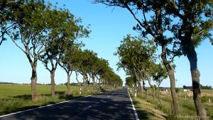 MIN_Week 58_Road Trip_trees_wm_s