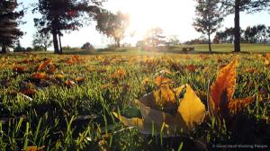 MIN 182_Autumn Colors_s