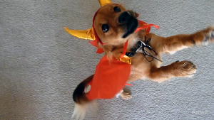 Dancing Happy Halloween Dog - In A Colorado Minute (Week 183)