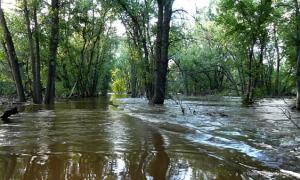 MIN_214 Poudre Trail_flooded_s