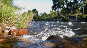Poudre River Swim - In A Colorado Minute (Week 225)