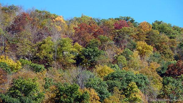 MIN 231_Catskills_foliage_s
