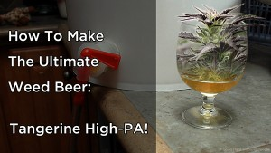How to make Tangerine High-PA (Weed Beer Recipe) - In A Colorado Minute (Week 264)