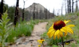 MIN 272_Greyrock Trail_Flower_s