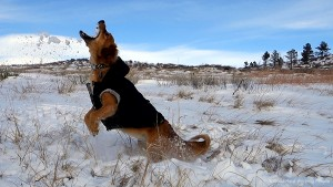 Dog Catching Snow (Whiskey Business 4) – In A Colorado Minute (Week 299)