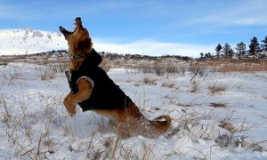 MIN 299_Snow-Catching Dog_Left_s