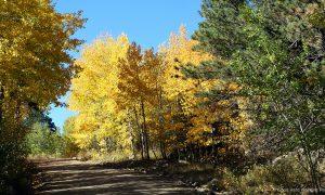 cherokee-park-road_min-335_01_aspen_s